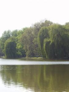 Lietzensee 3